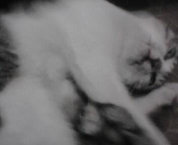 Ini Irro, kucing kampung yang kupelihara, yang hilang juga.. Ceritanya dia lagi narsis 'sok nyeremin' hahaha..